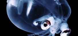 El Calamar de Cristal