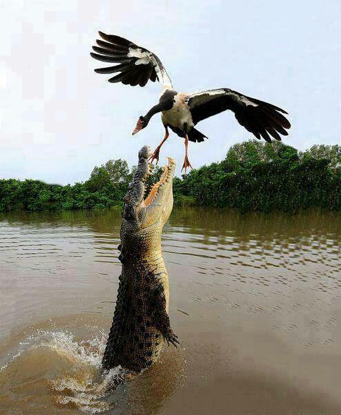 Fotos asombrosas de animales