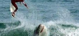 Surfeando con tiburones