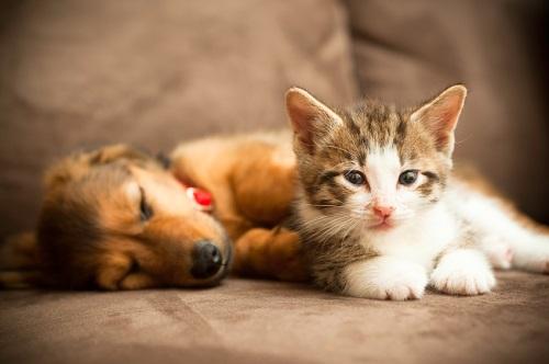 Animalesmascotas