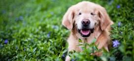 Smiley, un perro ciego que ayuda a niños