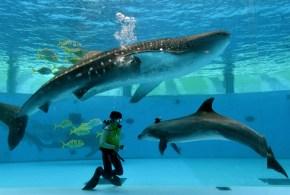 Diferencias entre un delfín y un tiburón