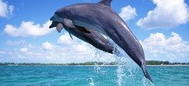 Datos curiosos de los delfines