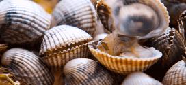 Los berberechos también son un molusco