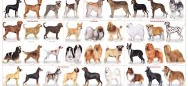 Perros con Pedigrí, dónde encontrarlos