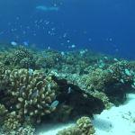exploración marina