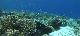 La importancia de la exploración marina para descubrir nuevas especies
