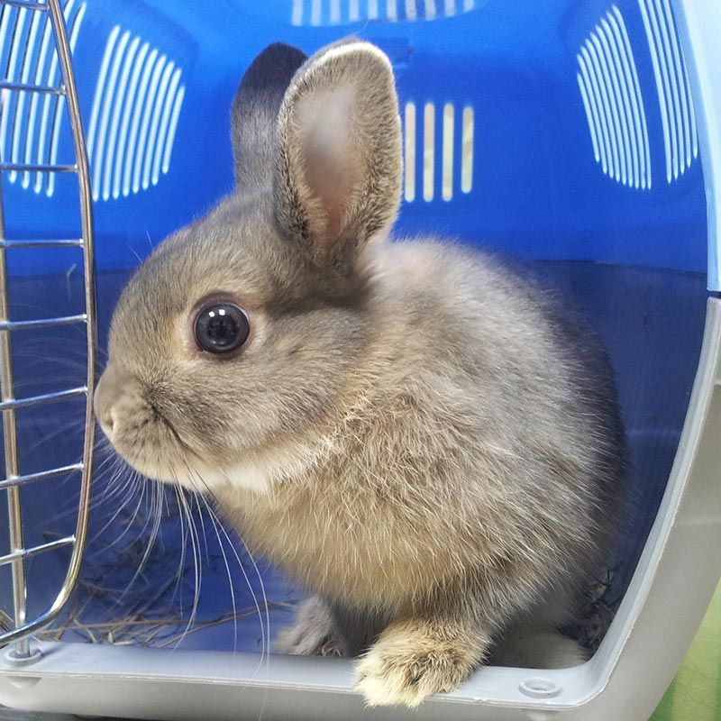 Imagen de un conejo en un transportín azul