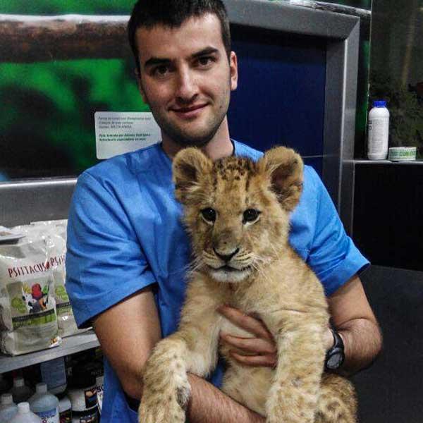 Veterinario abrazando a un león