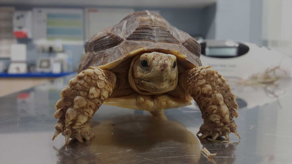 Imagen de una tortuga