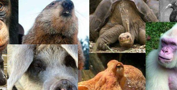 Imagen animales famosos