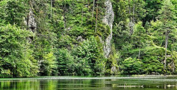 Imagen Día Internacional de los Bosques