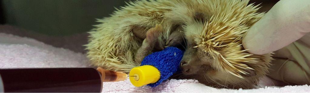 Imagen post oncología veterinaria