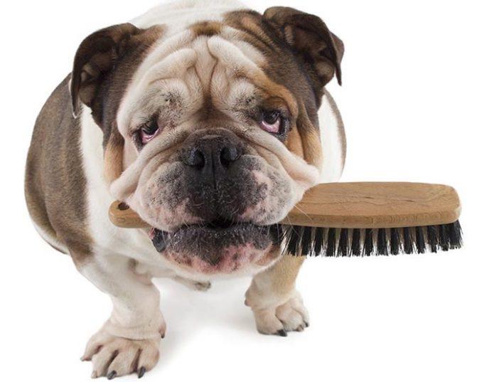 Image result for peinar a tu perro