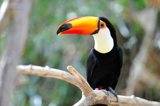 criar aves exoticas