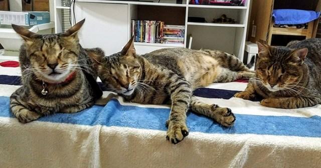 3 gatti ciechi adottato