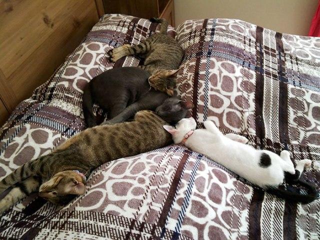 gatti ciechi e gatti adottati