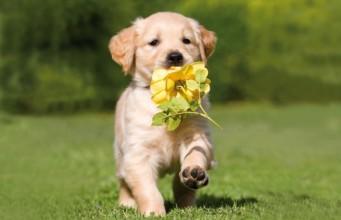 https://i1.wp.com/animalfair.com/wp-content/uploads/2013/04/cute-puppy-running-spring-dog-341x220.jpg