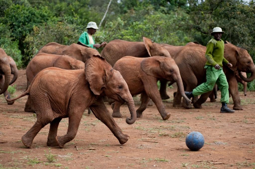 https://i1.wp.com/animalfair.com/wp-content/uploads/2014/06/born-to-be-wild-Elephants-1024x681.jpg