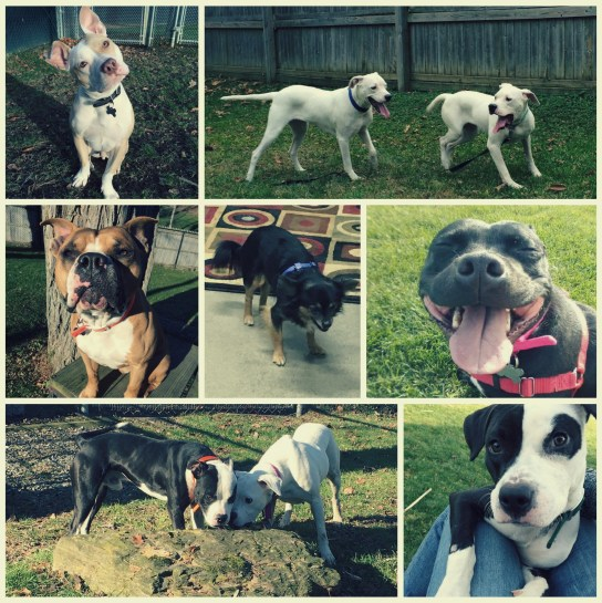 Are you ready to meet your BFF at AFF? Check out just a few of the amazing new dogs here on the Farm!