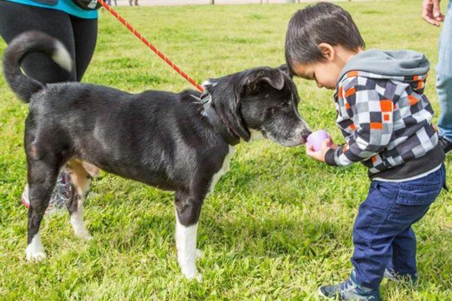 enrich shelter dog easter egg hunt