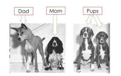 Breed Labels: When Guesses Turn Into Predictions