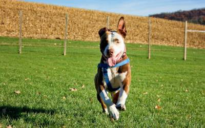 Petfinder Just Took a Huge Step in Helping Everyone Recognize that All Dogs Are Individuals