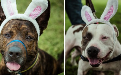 Easter Egg Hunts Give Dogs a Chance to Sniff Their Way into the Hearts of Potential Adopters