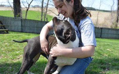"This Is Why We're Calling Bull On ""Pit Bull"" Awareness Events"