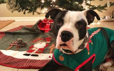 Community Focused Ideas to Help Shelter Pets Find Homes for the Holidays
