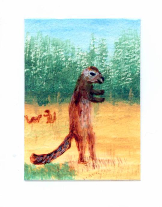 Xerus squirrel miniature painting