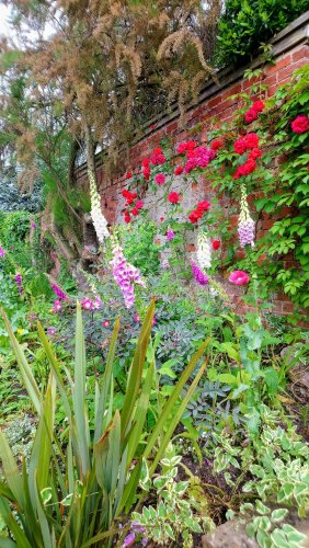 Garden with summer flowers including roses, foxgloves
