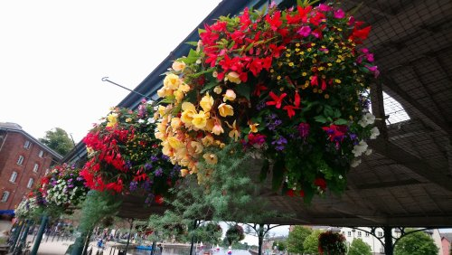 Hanging baskets full of summer flowers at the transit shed at Exeter Quay