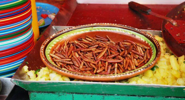 Gusanos de maguey y chinicuiles, los reyes de los insectos comestibles