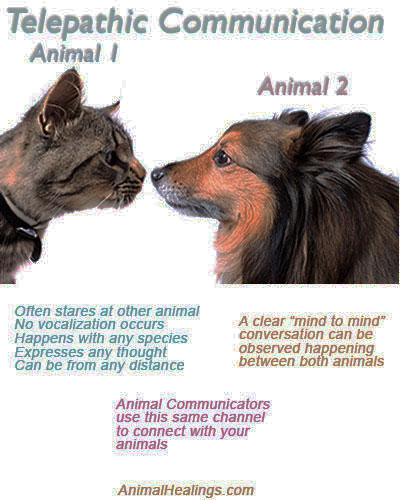Image result for HUMANS ANIMALS TELEPATHY
