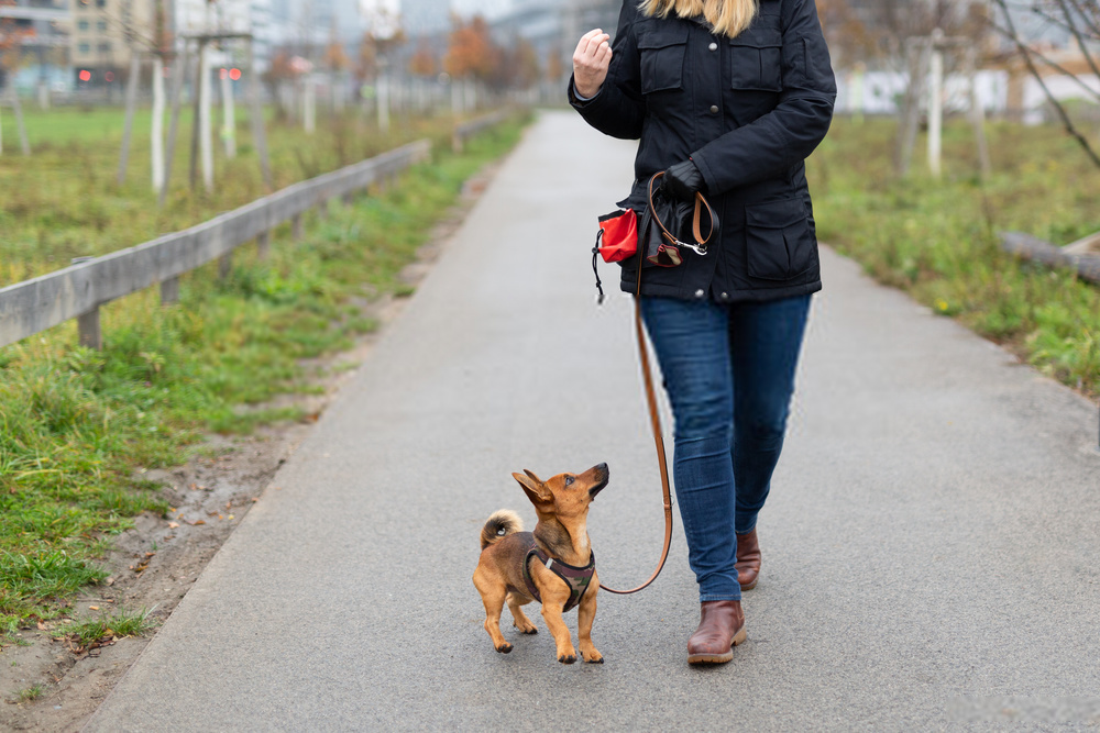 Best Puppy Obedience Training Tips you Must Know