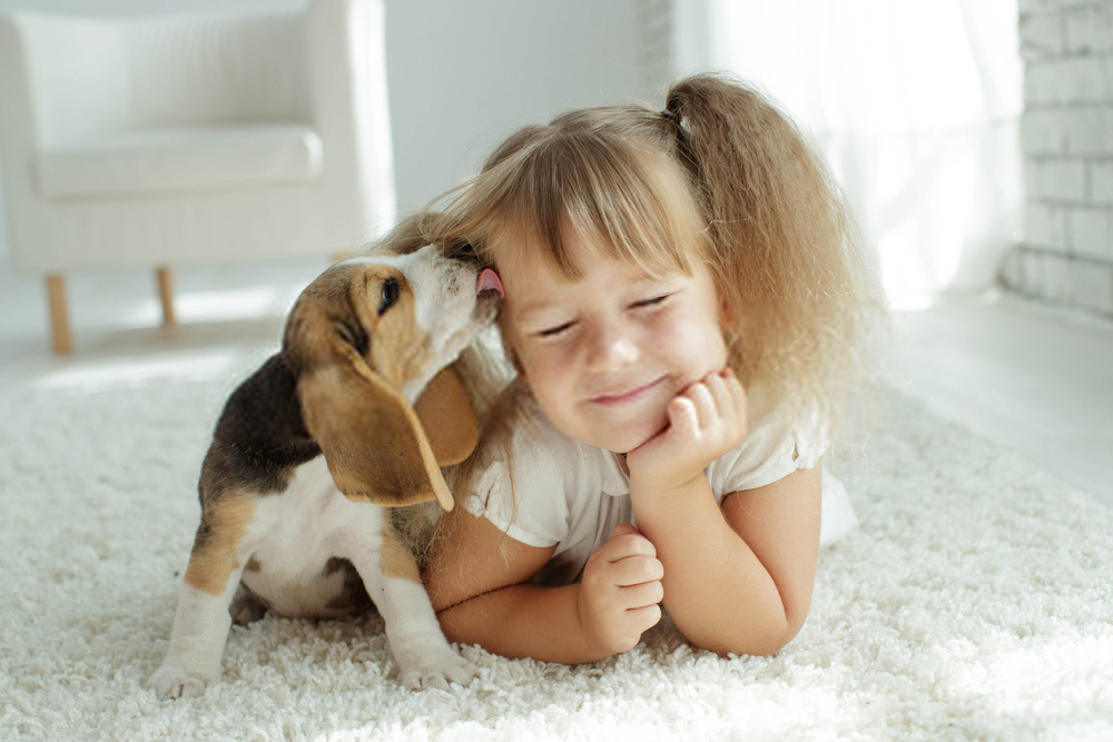 Top 10 Tips On Puppy And Dog Obedience Training