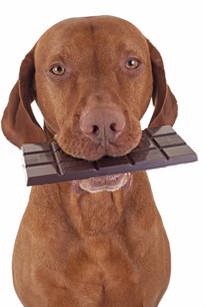 Toxic Foods For Dogs-- A Brief Guide On Dog Foods.