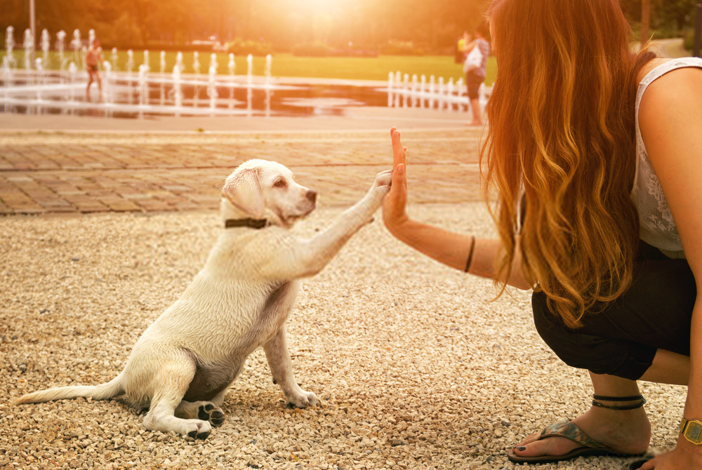 How To Create Puppy Training -Amazing Guide On Dog Actions For Training