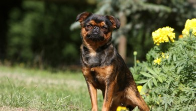 What Can I Give MY Dog For Pain Relief –Dog Pain Relief Guide