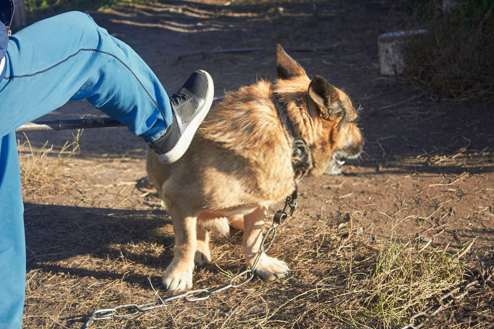 Best Way to Punish a Dog- Canine Discipline Guide