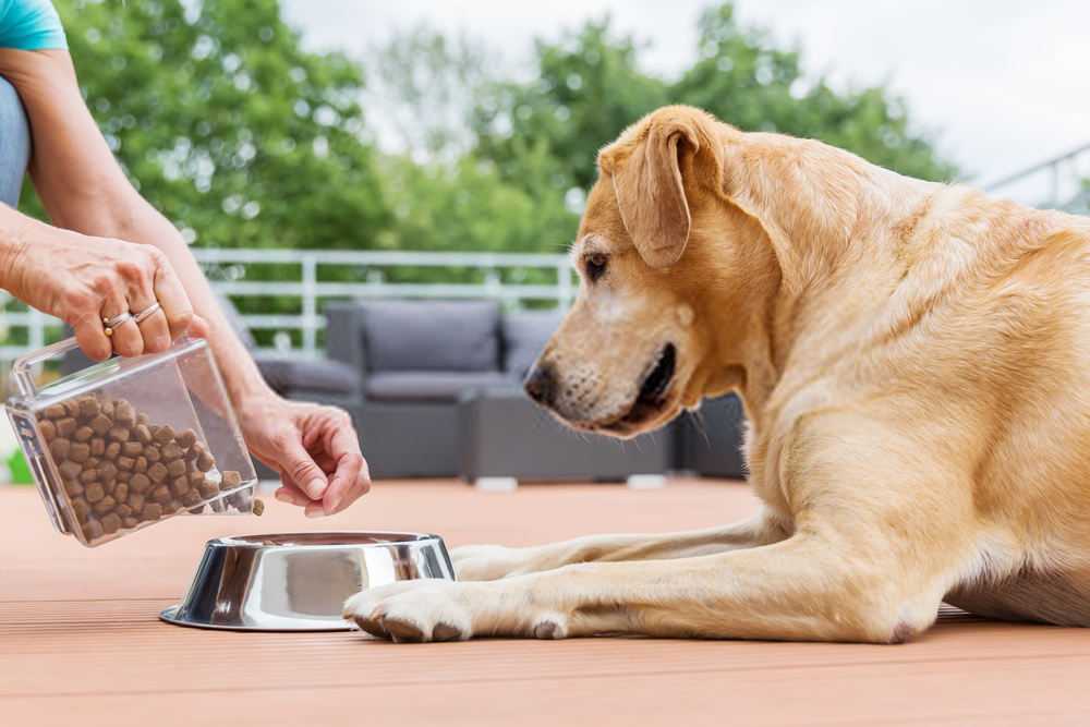 Can Dogs Eat Sweet Potatoes| Homemade Sweet Potato Canine Treats