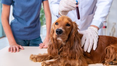 Dog Pooping Blood|A Detailed Guide On Canine Diarrhea And it's Solutions