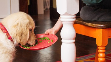 Do Dogs Eat Peas? Best Guide About Canine Food