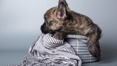 Kennel Cough in Dogs: Symptoms , Causes and Cure