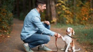 How To Teach a Dog To Fetch | Best Dog Training Tips
