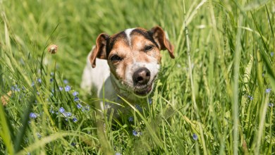 Why Dogs Eat Grass? A Detailed Guide On Canine Habits