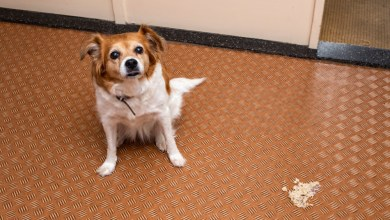 Dog Diarrhea Treatment Guide-Tips and Cure