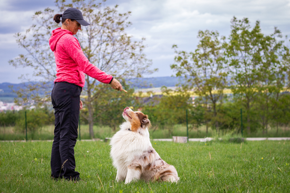 5 Amazing Types OF Dog Training --Teach Your Canine About Obedience