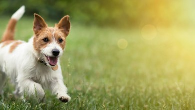 Pancreatitis In Dog reatment-Symptoms and Get It Treated Properly